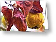 After Rain - Fall In Mendocino Orchard Greeting Card