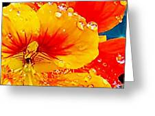 After The Rain Color Greeting Card