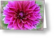 After The Rain - Purple Dahlia Greeting Card