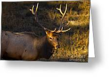 After The Rut Greeting Card by Barbara Schultheis
