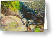 Afternoon Beside The Lane Cove River Greeting Card