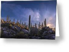 Afternoon Desert Scene Greeting Card