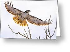Afternoon Flight Greeting Card