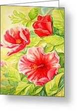 Afternoon Hibiscus Greeting Card