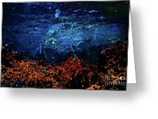 Afternoon On The Reef Greeting Card