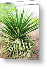 Afternoon Yucca Greeting Card