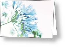 Agapanthus 1 Greeting Card