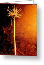 Agapanthus After The Storm Greeting Card