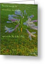 Agapanthus Dawn Greeting Card