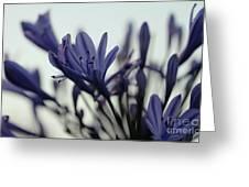 Agapanthus - Love Flower -2  Greeting Card