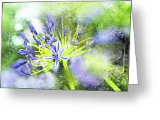 Agapanthus Perfection Greeting Card