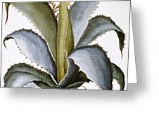 Agave, 1613 Greeting Card