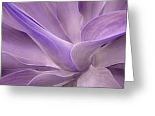 Agave Attenuata Abstract 2 Greeting Card