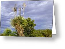 Agave Cactus And A Purple Sky Greeting Card