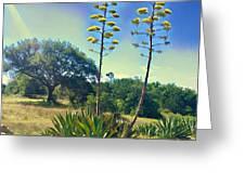 Agave Trail  2 Greeting Card