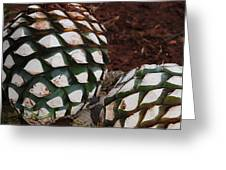 Agave Pineapples Greeting Card