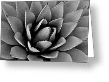 Agave Plant Greeting Card
