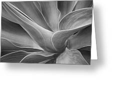 Agave Shadows And Light Greeting Card