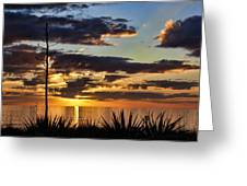 Agave Sunset Greeting Card