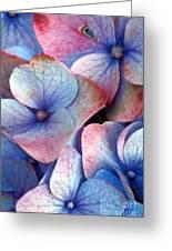 Ageing Hydrangea Greeting Card