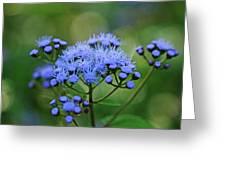 Ageratum Blue Greeting Card
