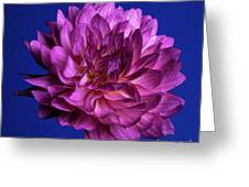 Aglow Greeting Card