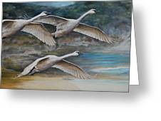 Ahead Of The Storm - Trumpeter Swans On The Move Greeting Card