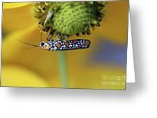 Ailanthus Webworm Moth #6 Greeting Card