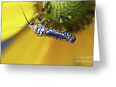 Ailanthus Webworm Moth Greeting Card