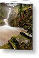 Aira Force High Water Level Greeting Card