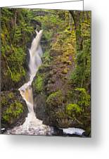 Aira Force Greeting Card