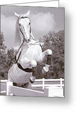 Airs Above The Ground - Lipizzan Stallion Rearing Greeting Card