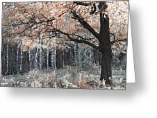 Airy Autumn In Woods Greeting Card