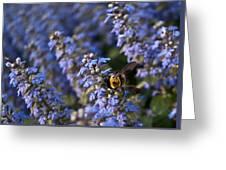 Ajuga And Bumblebee Greeting Card