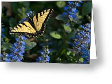 Ajuga With Tiger Butterfly Greeting Card
