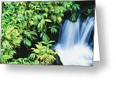 Akaka Falls State Park Greeting Card