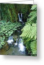 Akaka Falls Stream Greeting Card