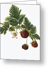 Akala Berries Greeting Card