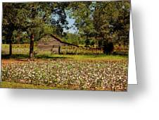 Alabama Cotton Field Greeting Card