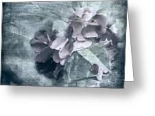 Alabaster Petals Greeting Card