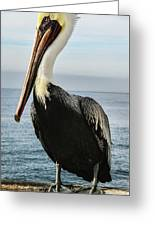 Alan The Pretty Pelican Greeting Card