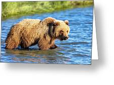 Alaska Bear Greeting Card