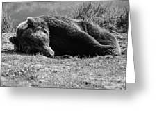 Alaska Grizzly - Do Not Disturb Grayscale Greeting Card