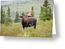 Alaska Monarch #3 Greeting Card