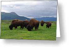 Alaska Wood Bison Greeting Card