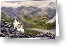 Alaskan  Dalls Sheep Greeting Card
