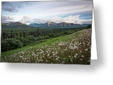Alaskan Dandelions  Greeting Card