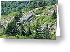 Alaskan Wilderness Greeting Card