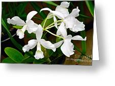 Alba  Orchid Greeting Card