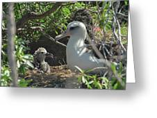 Albatross Mom And Baby Greeting Card